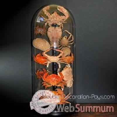 Collection de crabes Objet de Curiosite -AN082