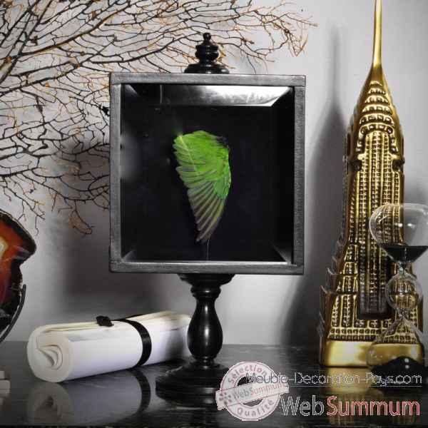 aile verte inseparable d 39 abyssinie objet de curiosit de objet original du monde. Black Bedroom Furniture Sets. Home Design Ideas