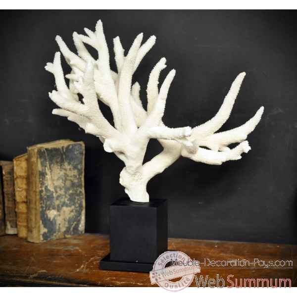 Corail branche staghorn madrepore gm socle carre Objet de Curiosite -CO193-7