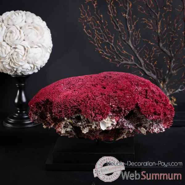 Corail rouge gm 25-30cm Objet de Curiosite -CO286-6