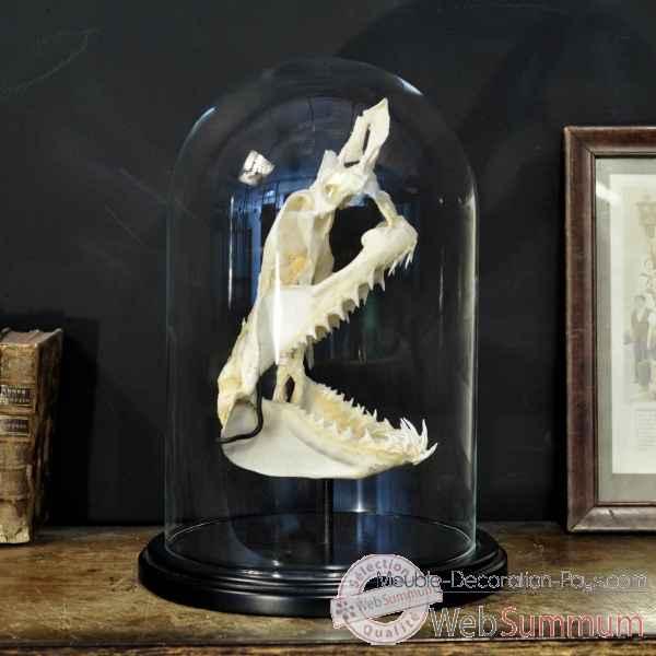 cr ne complet de requin mako pm sous globe objet de curiosit dans nouveaux objets a. Black Bedroom Furniture Sets. Home Design Ideas