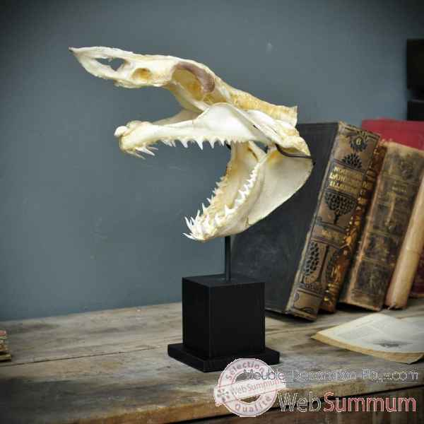 Achat de requin sur meuble decoration pays for Requin decoration