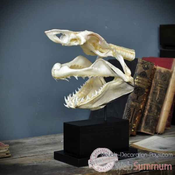 Crane complet de requin mako sur socle rectangle Objet de Curiosite -PU425-4