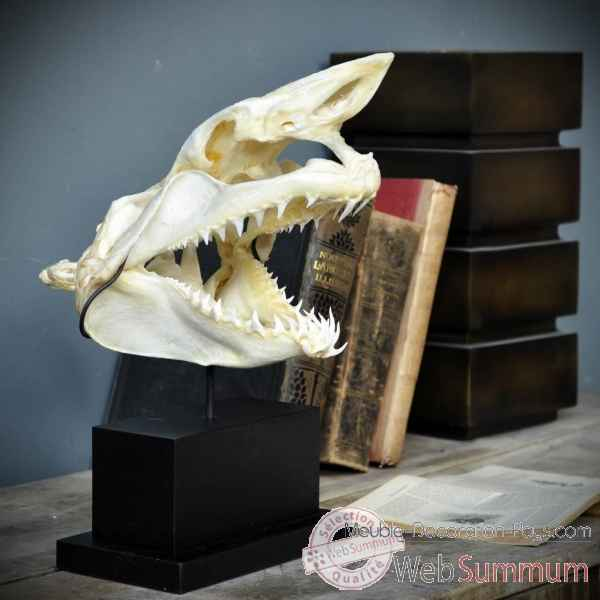 Crane complet de requin mako sur socle rectangle Objet de Curiosite -PU425-5