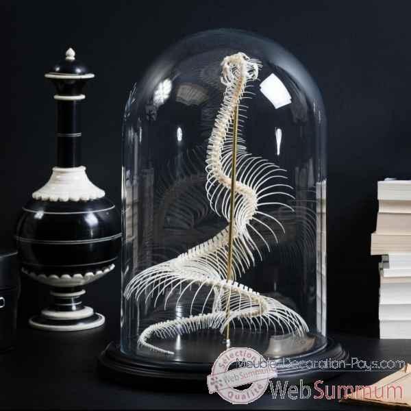 squelette vip re du gabon sous globe objet de curiosit de objet original du monde. Black Bedroom Furniture Sets. Home Design Ideas