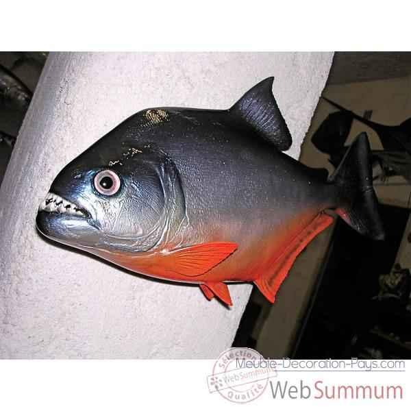 Achat de piranha sur meuble decoration pays for Achat poisson